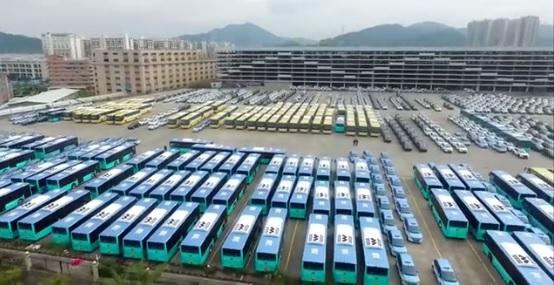 byd bus flotte