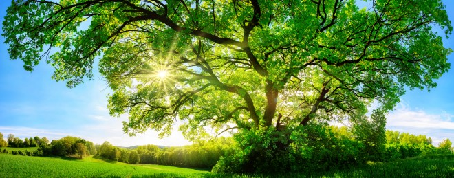 ECARIO Newsletter oekologisch